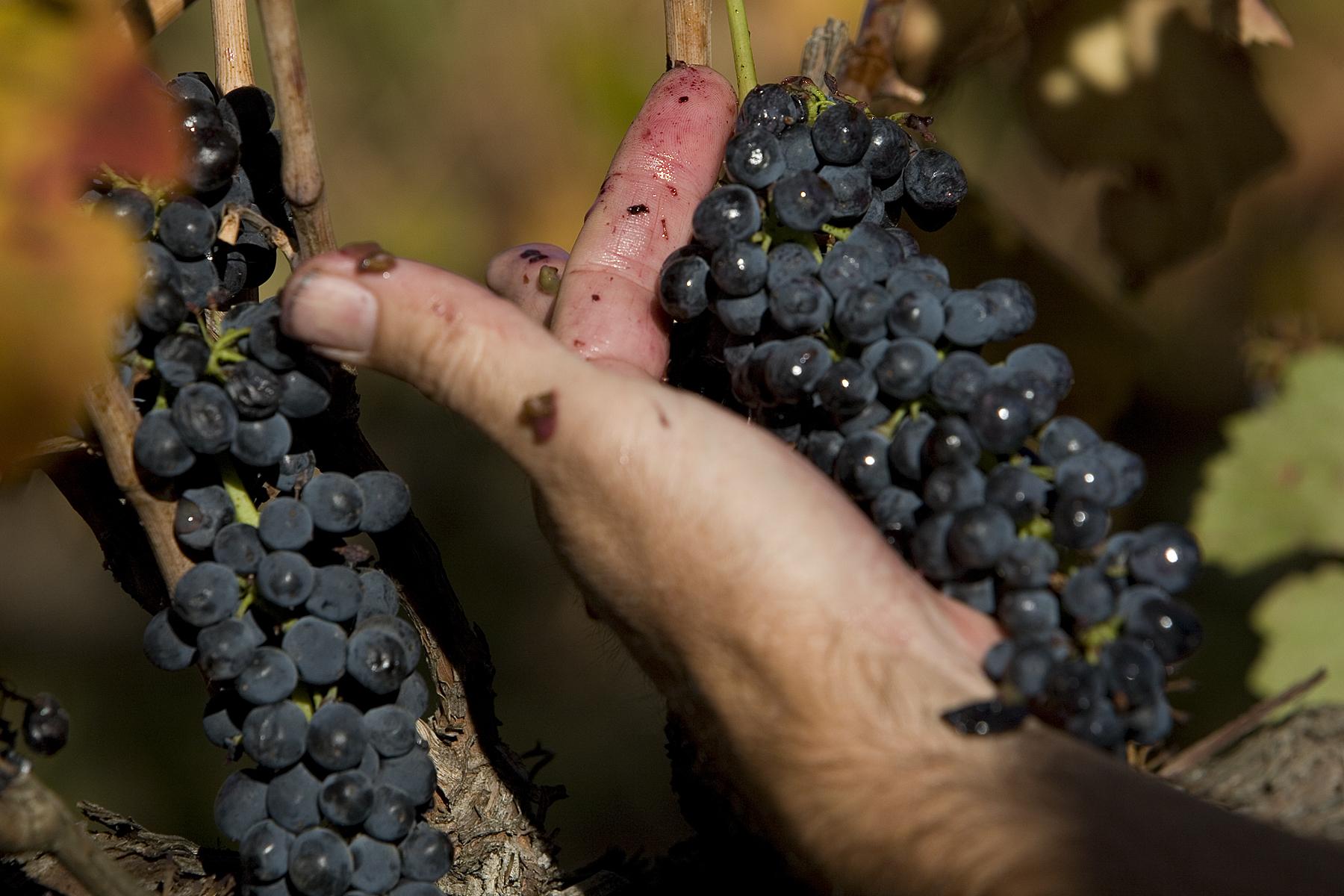 Tidswell Wines