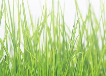 Vita Verde AG