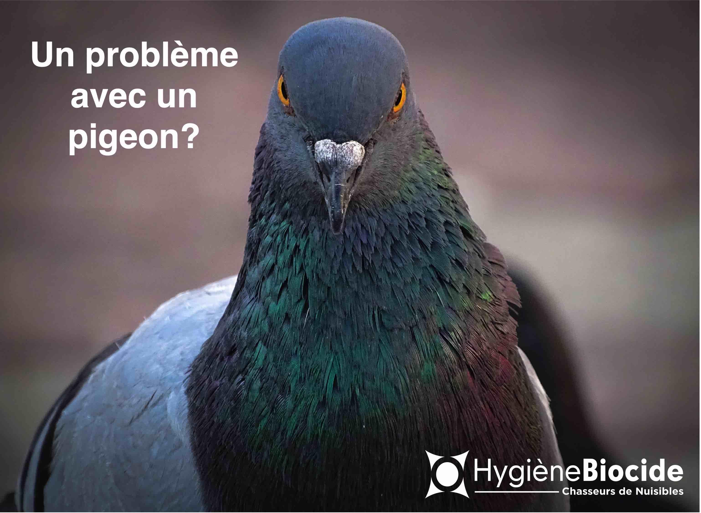 Hygiène Biocide