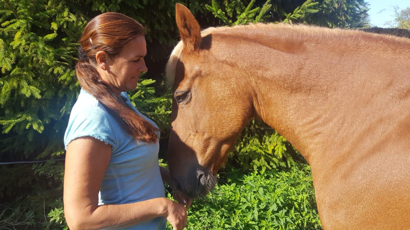 Pferd im Einklang