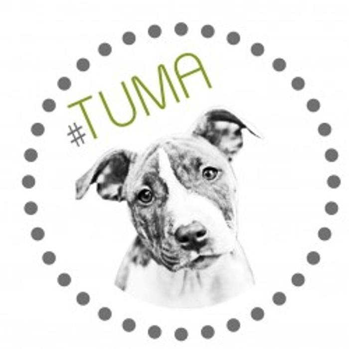 Bild zu Hundetraining-Tuma in Hilden