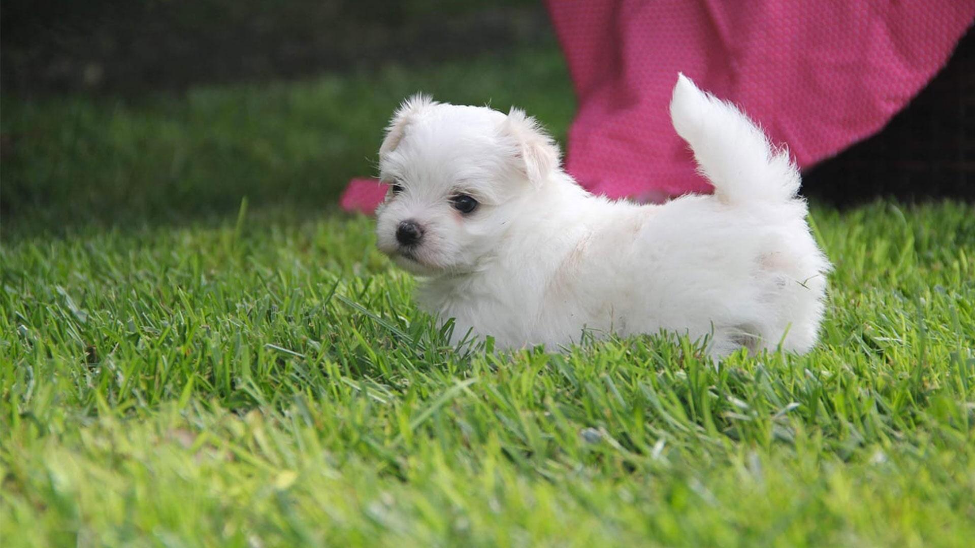 Bianco Grifo