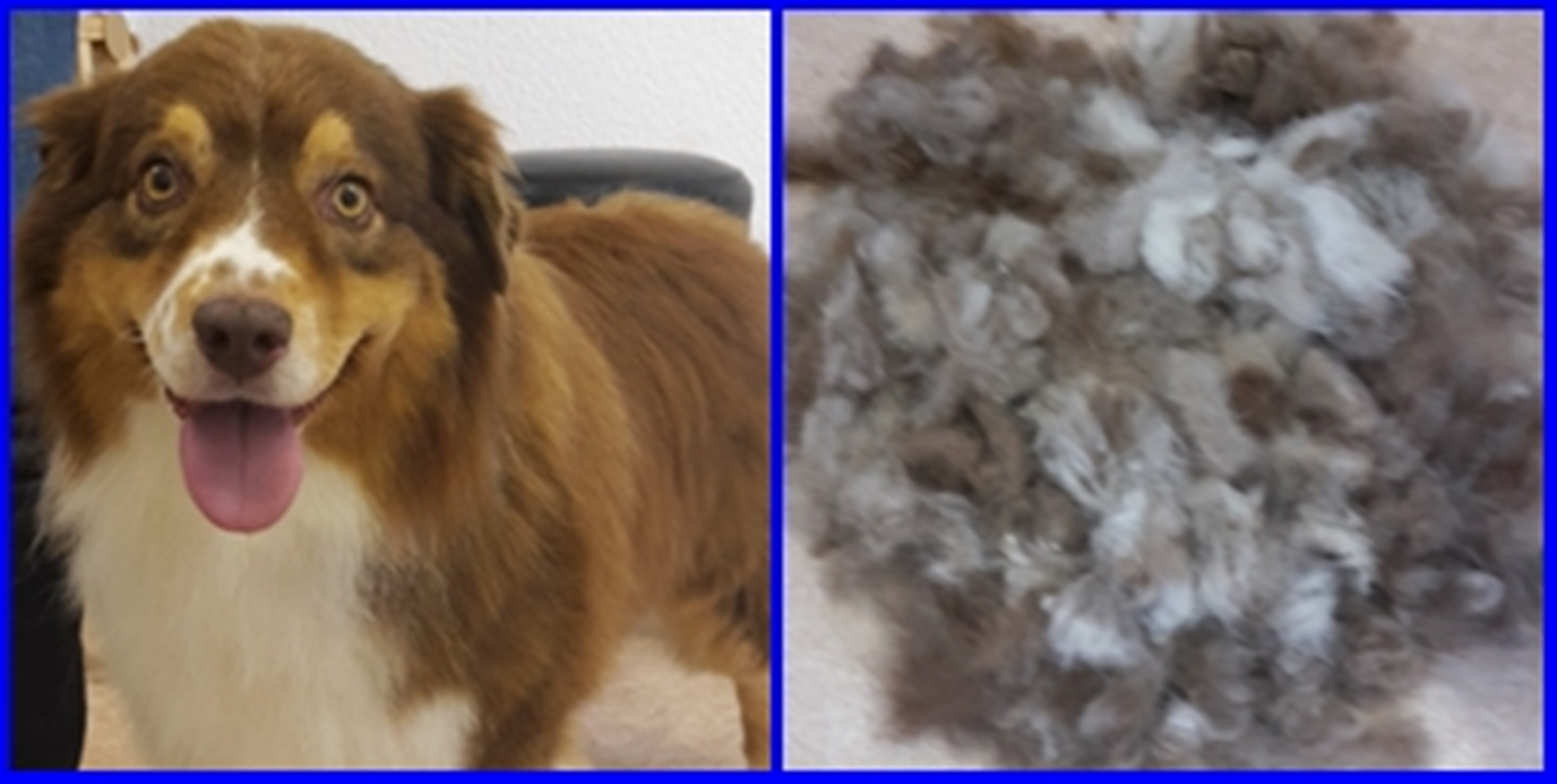 Nice Dog - Hundesalon - West-Highland-White-Terrier