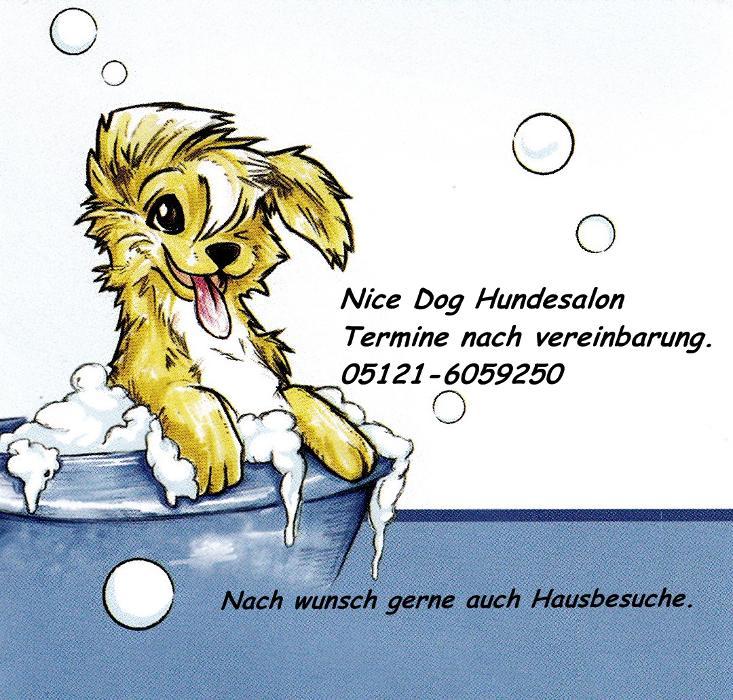 Bild zu Nice Dog - Hundesalon - West-Highland-White-Terrier in Giesen bei Hildesheim