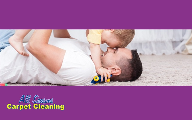 All Seasons Carpet Cleaning & Integrated Pest Management - Bundaberg, QLD 4670 - (07) 4152 0300 | ShowMeLocal.com