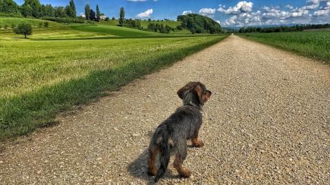 Peter Treier - Hund und Natur