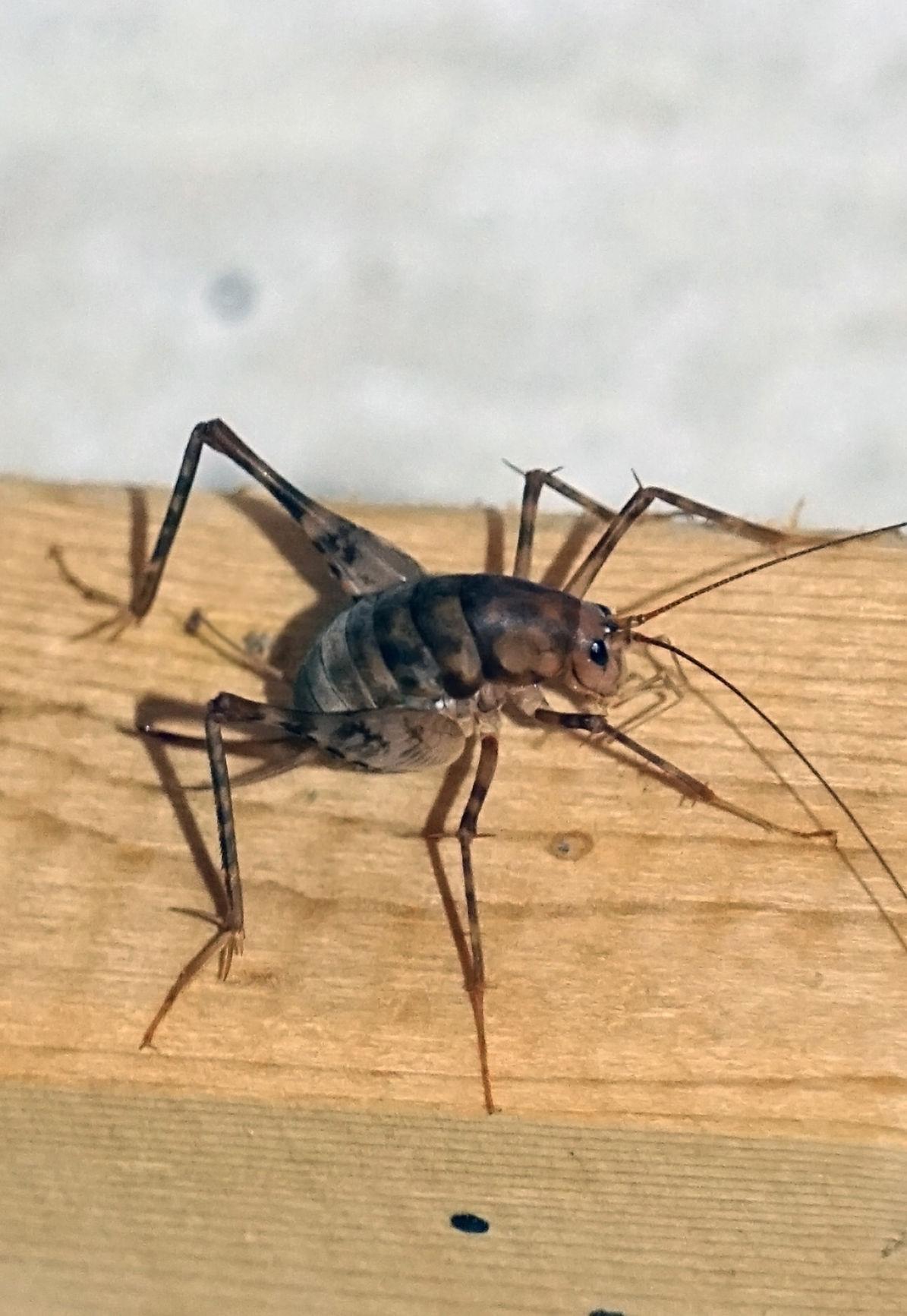 #1 'Til Done Pest Control