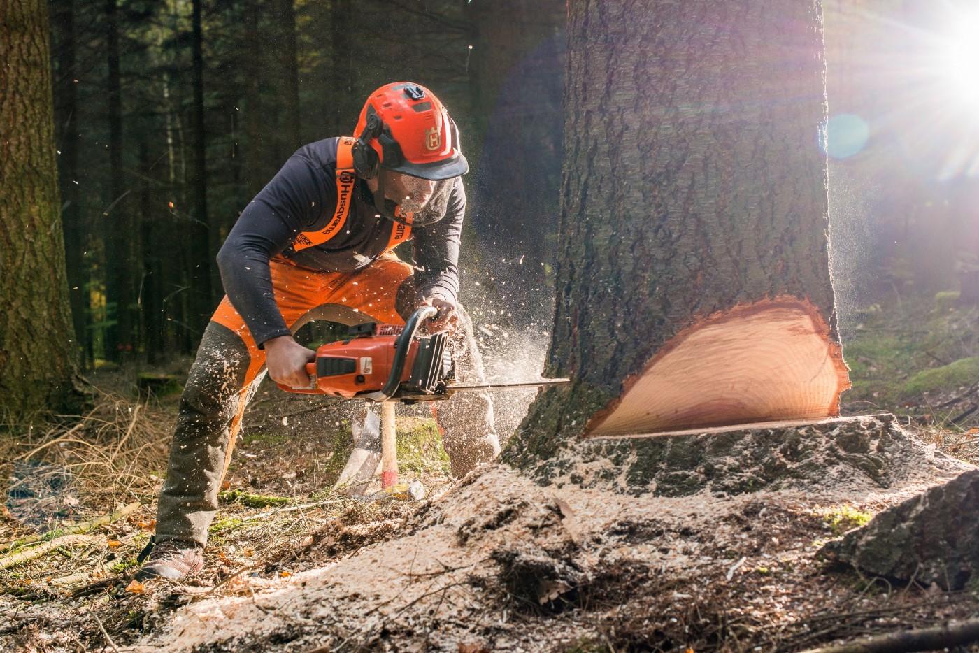 Fotos de Die Holzfäller GbR