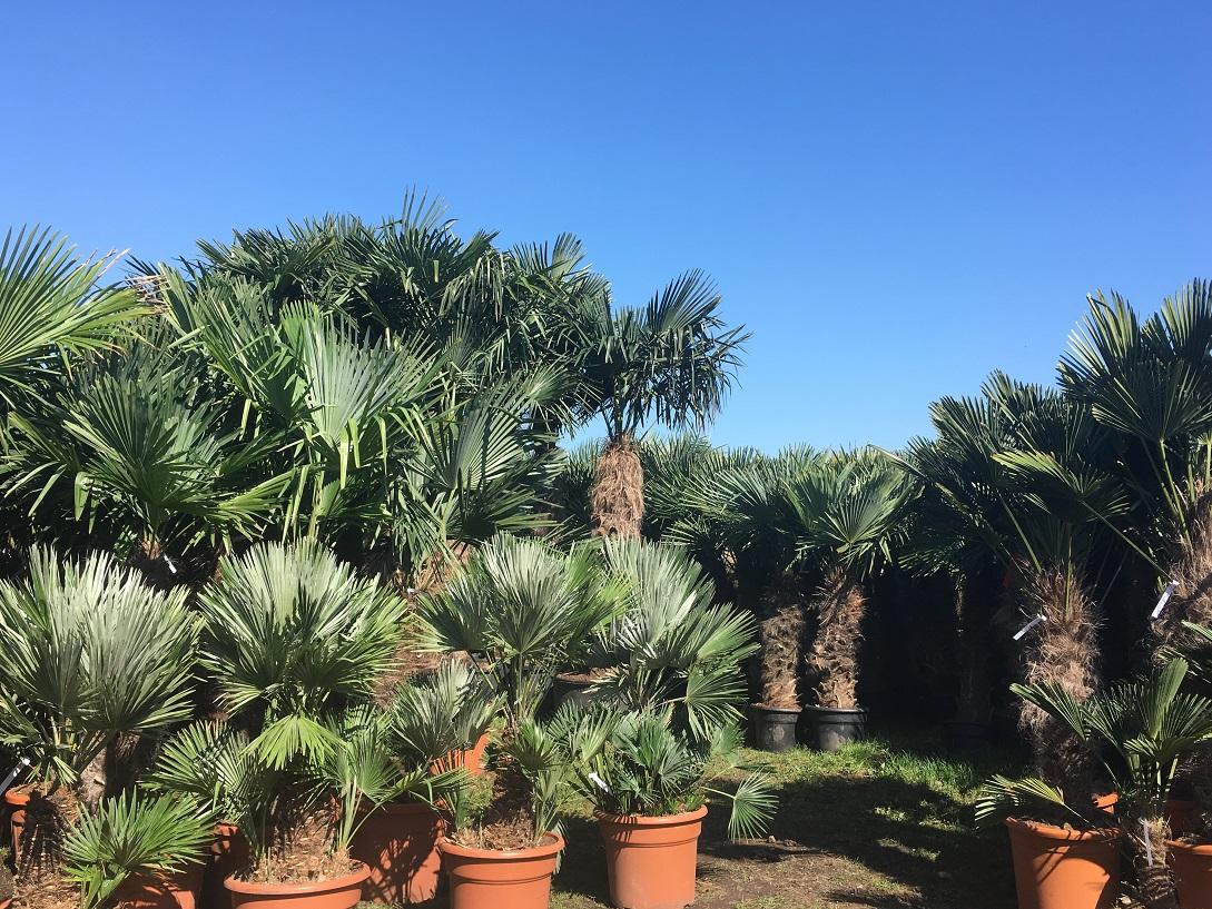 The Palm Tree Company - Clitheroe, Lancashire BB7 9AD - 01254 447964 | ShowMeLocal.com