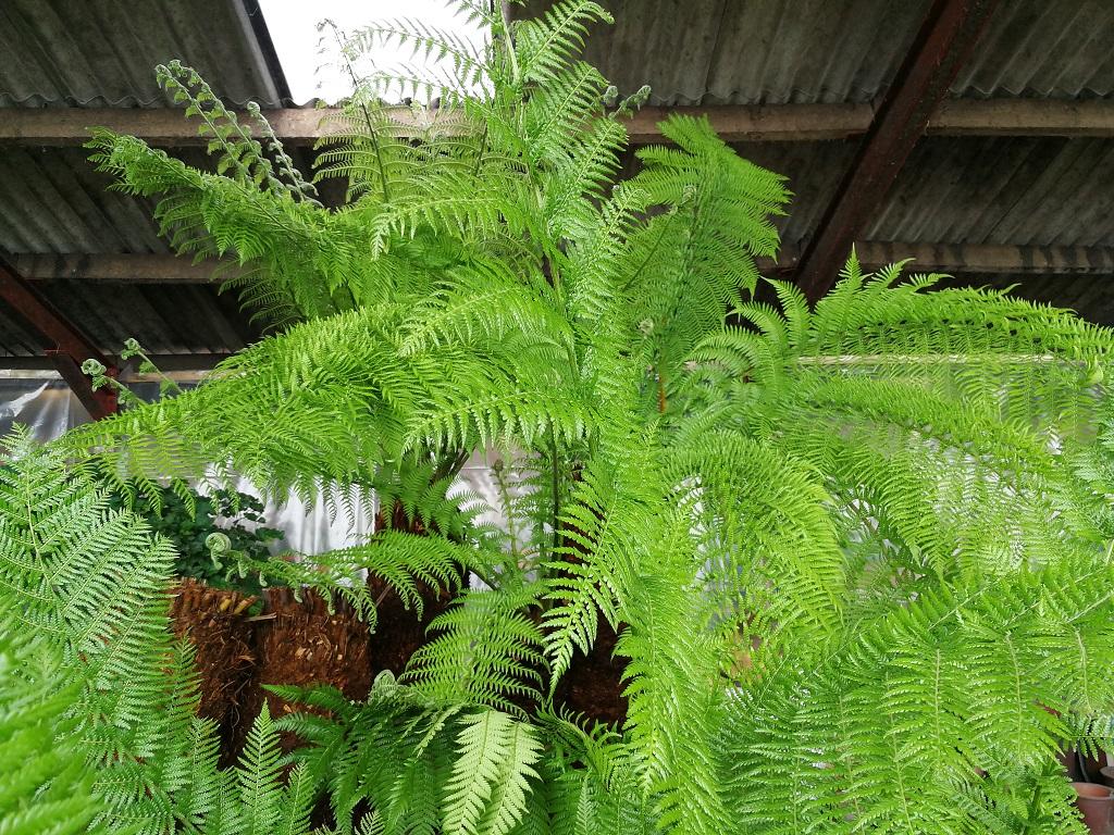 The Palm Tree Company