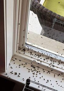 Forest of Dean Pest Control - Lydney, Gloucestershire GL15 6HQ - 01594 528359 | ShowMeLocal.com