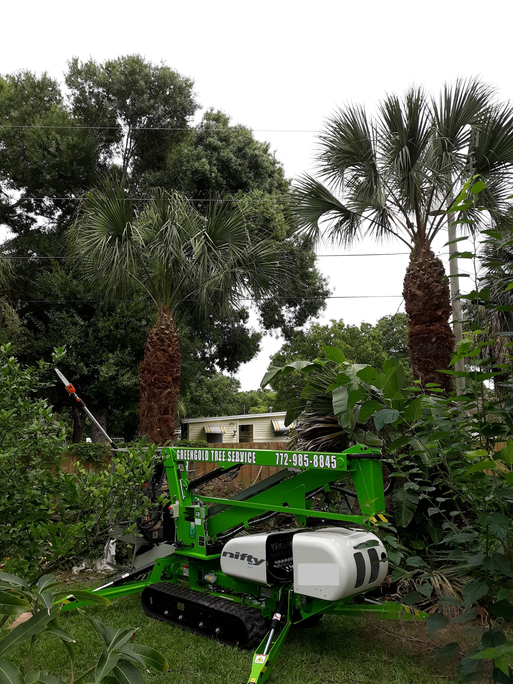 Greengold Tree Service - Port St. Lucie, FL 34983 - (772)985-8845 | ShowMeLocal.com