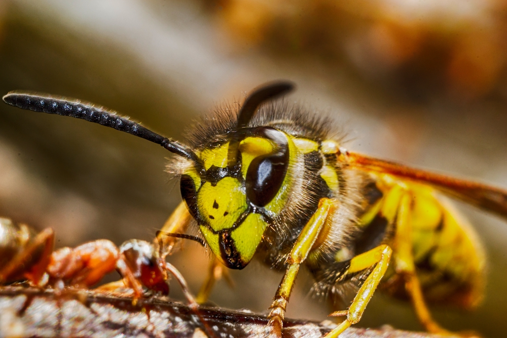 Wasp Exterminator Nottinghamshire - Nottingham, Nottinghamshire NG12 4ED - 07775 563218 | ShowMeLocal.com