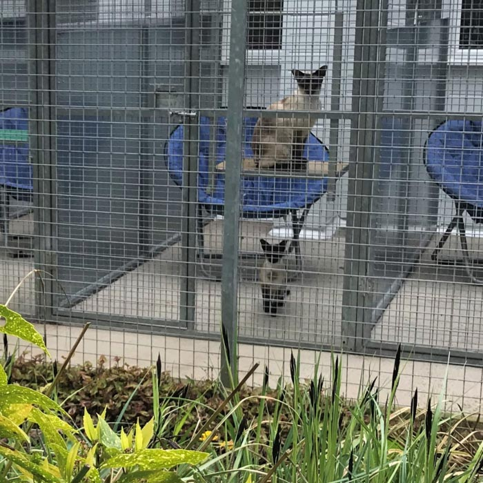 BCK Brandesburton Cattery and Kennels