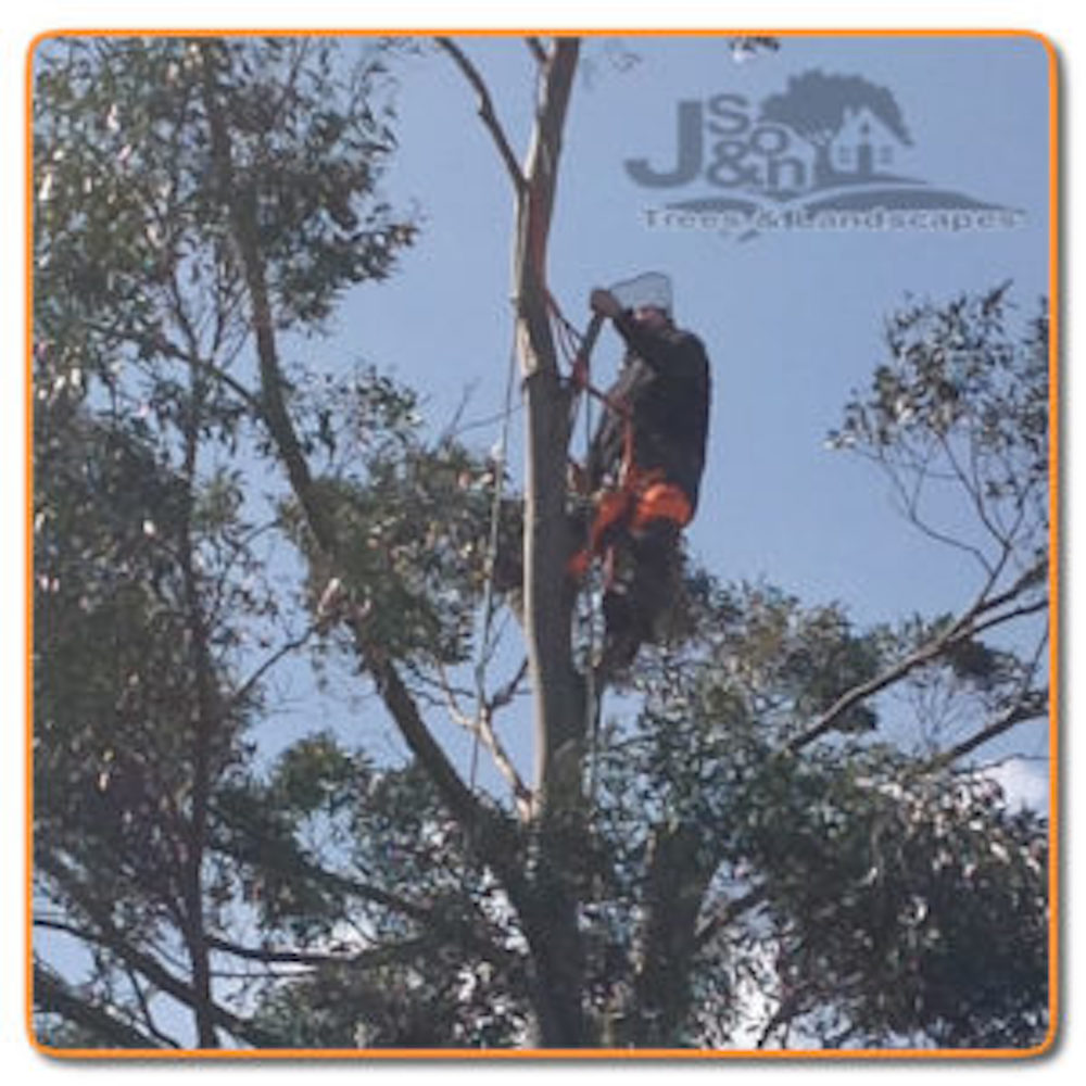 J and Son Trees and Landscapes - Birmingham, West Midlands B28 0EF - 07899 369847 | ShowMeLocal.com