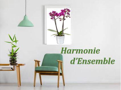 Harmonie d Ensemble