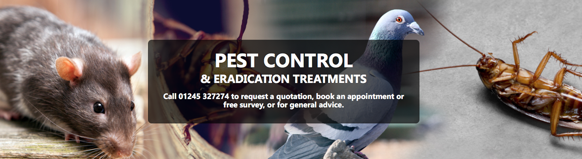 St Georges Pest Control Southend - Hockley, Essex SS5 5BX - 01702 278024 | ShowMeLocal.com
