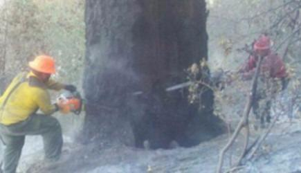 Image 7 | North Zone Fallers