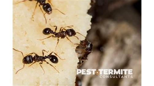 Pest & Termite Consultants