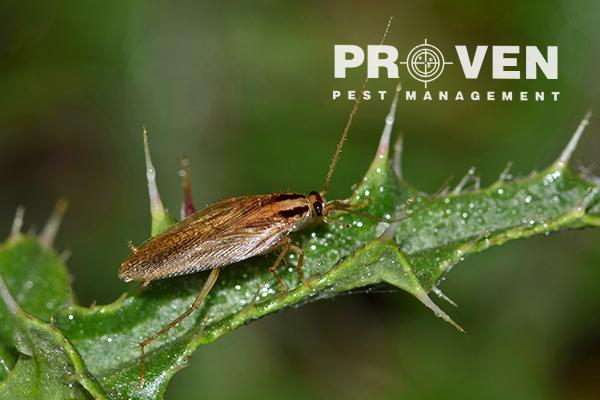 Proven Pest Management