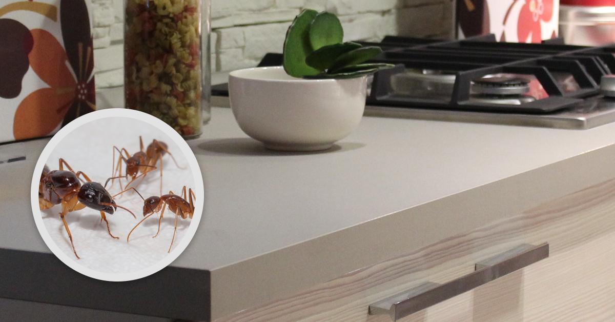 Holder's Pest Solutions