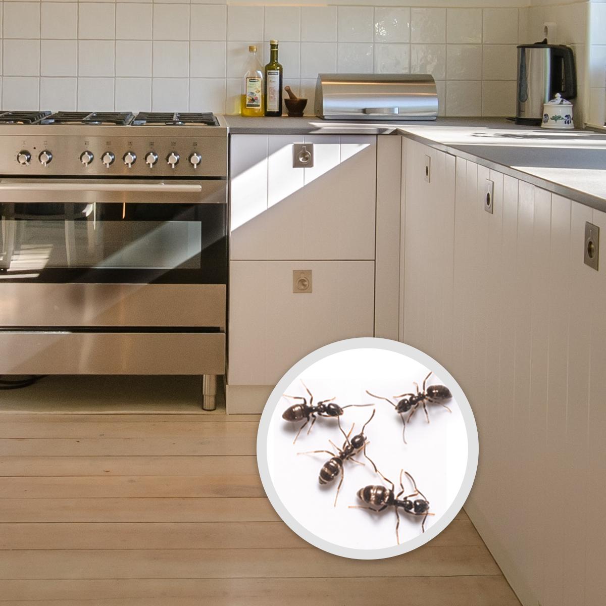 Wil-Kil Pest Control