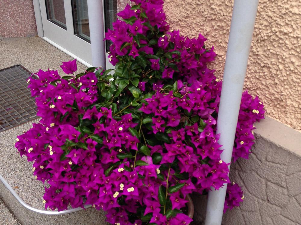 Blumen Gasser OEG