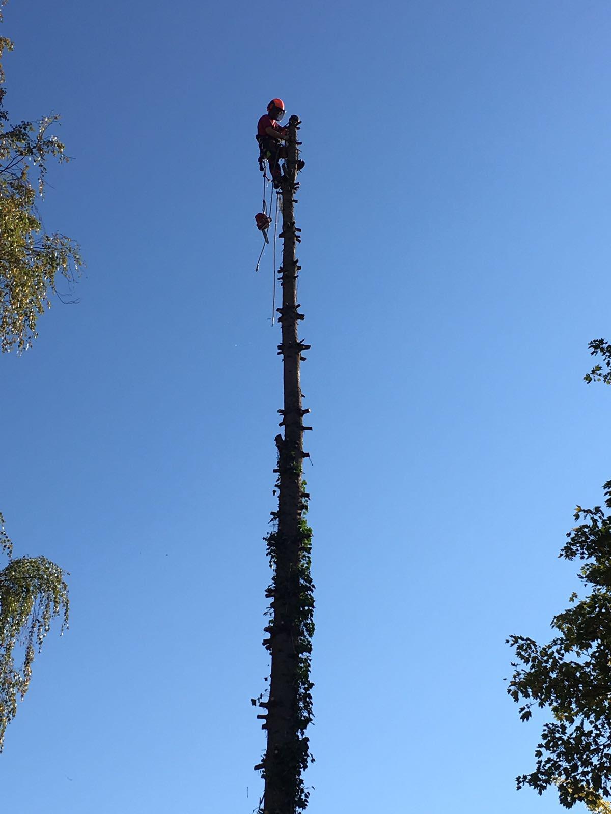 Demergo Baumpflege