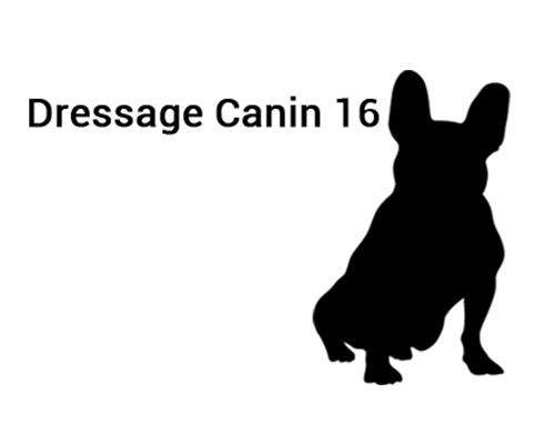Dressage canin 16