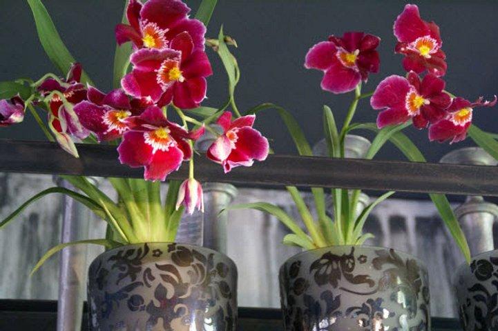 Der Blumenladen Romana Gattermann GmbH