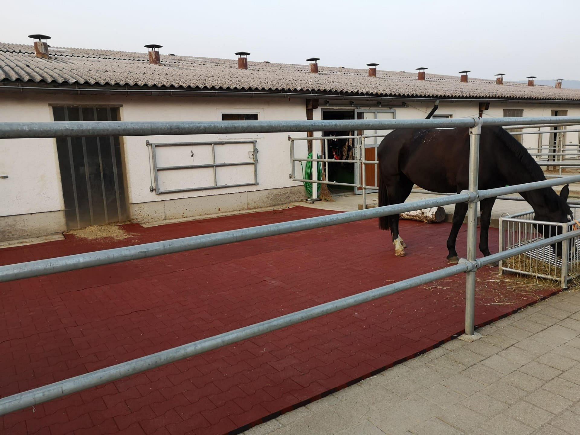 Sigrist Pferdeboden