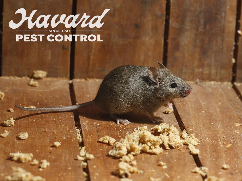 Havard Pest Control