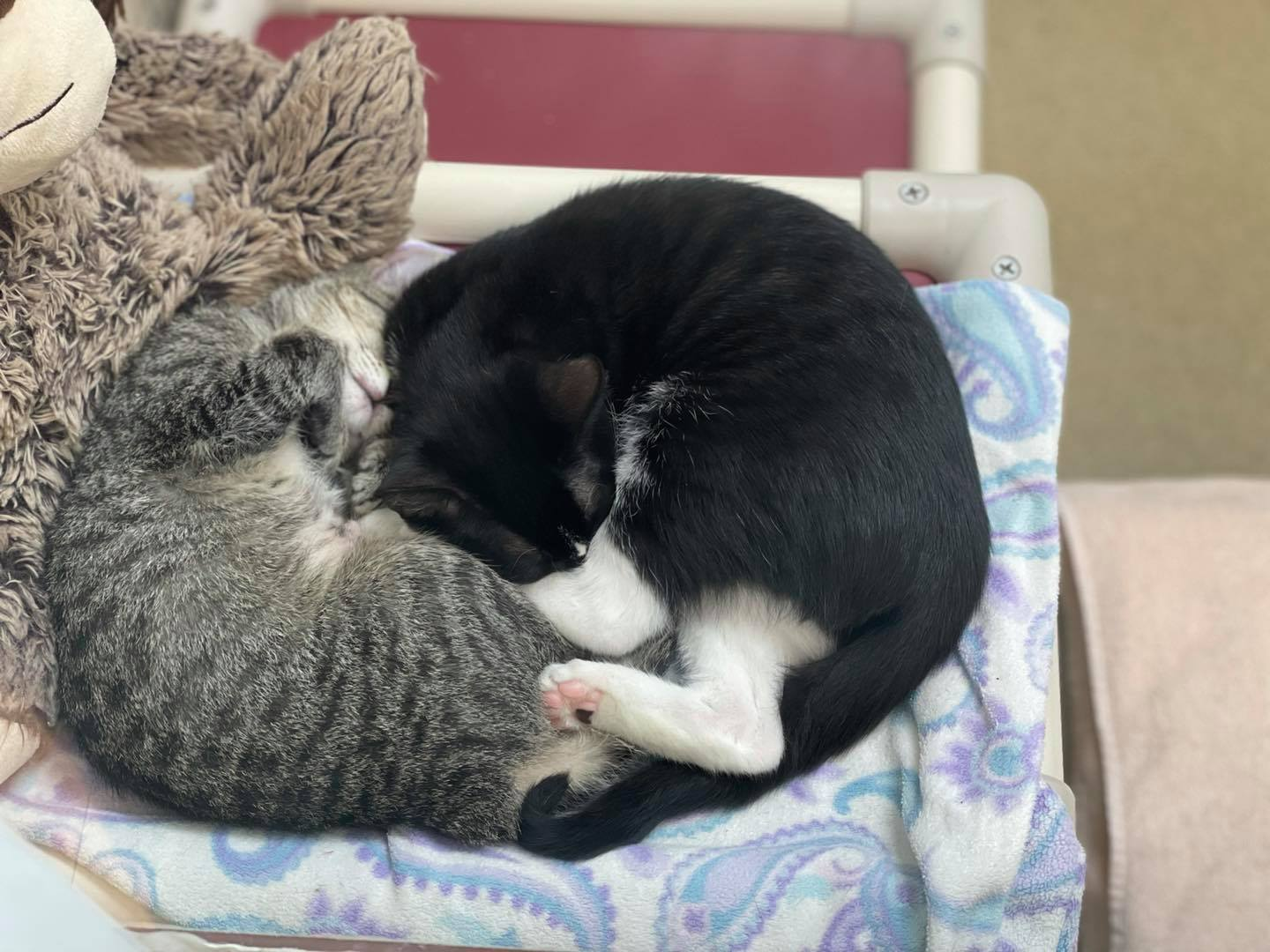 Humane Society of Greater Miami South