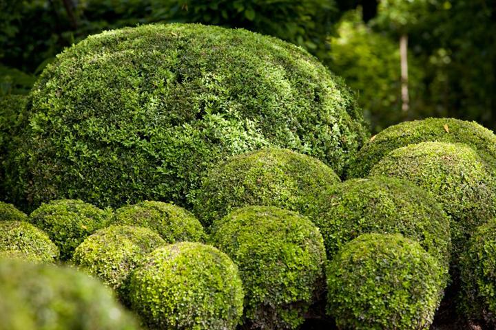 Foto de Feldmann GmbH & Co. KG Garten- u. Landschaftsbau