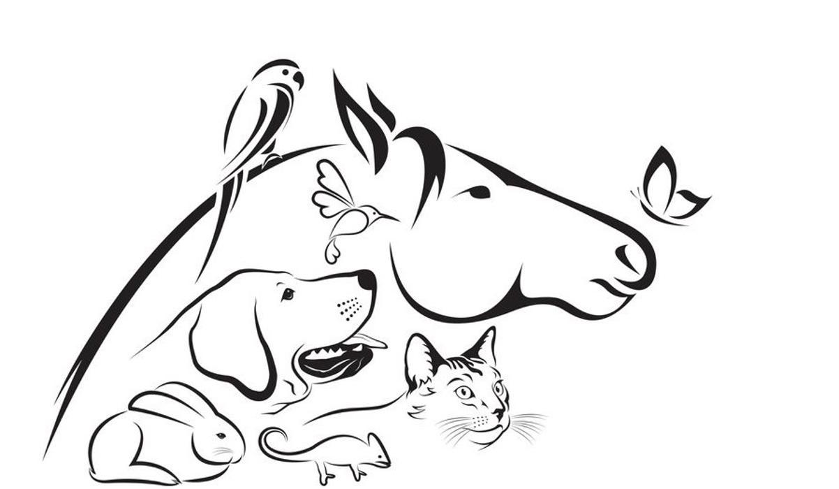 Bild zu Tierernährungsberaterin in Düren