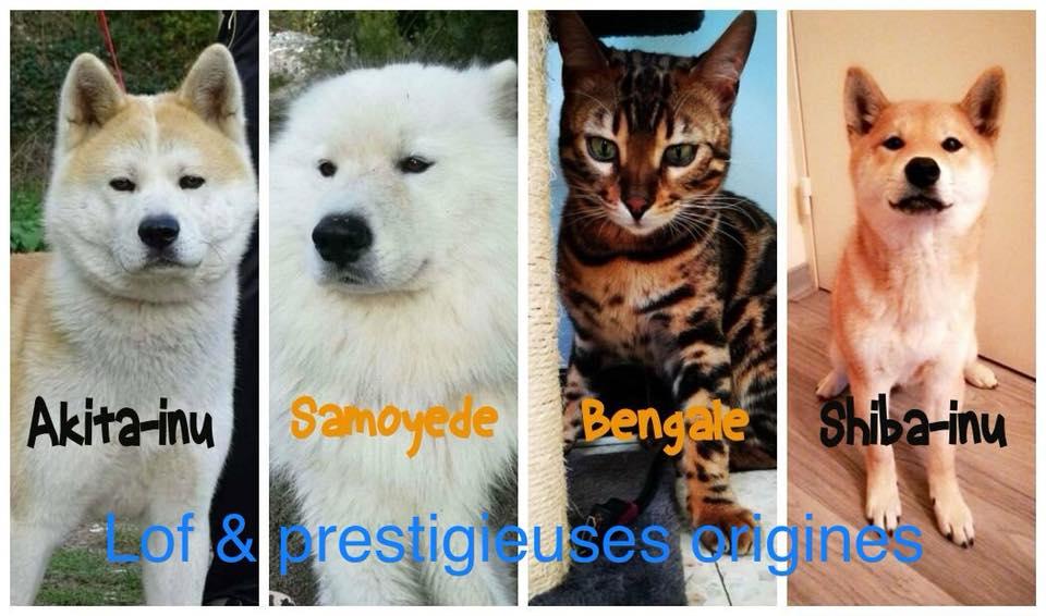 élevage familial en plein air de chats et chiens exotiques