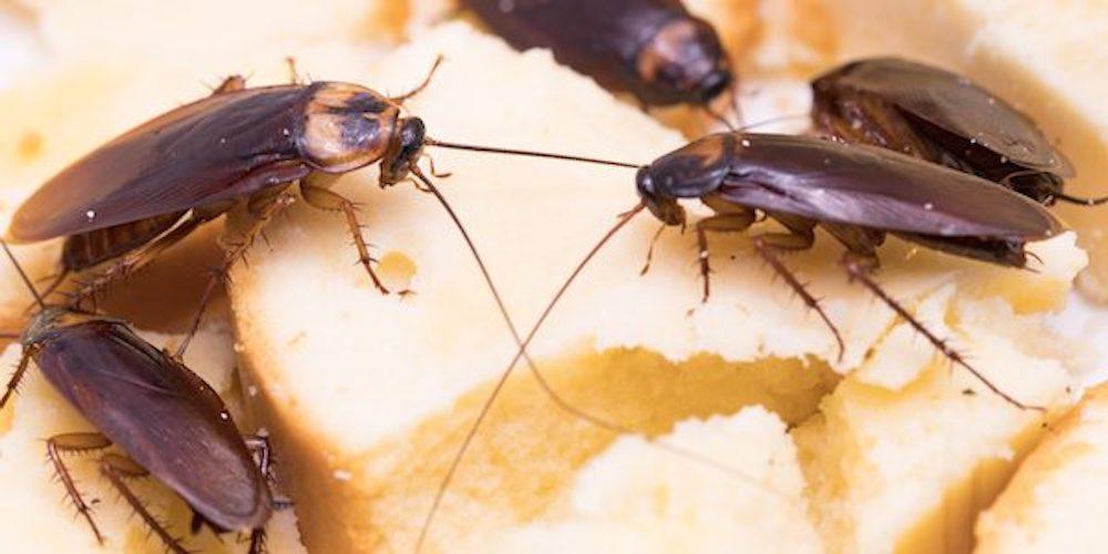 Pest control Contracts Shropshire - Oswestry, Shropshire SY11 2ES - 01952 898766 | ShowMeLocal.com