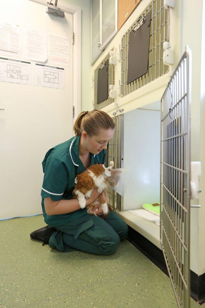Chantry Vets Castleford Veterinary Centre - Castleford, West Yorkshire WF10 1ES - 01977 553131 | ShowMeLocal.com