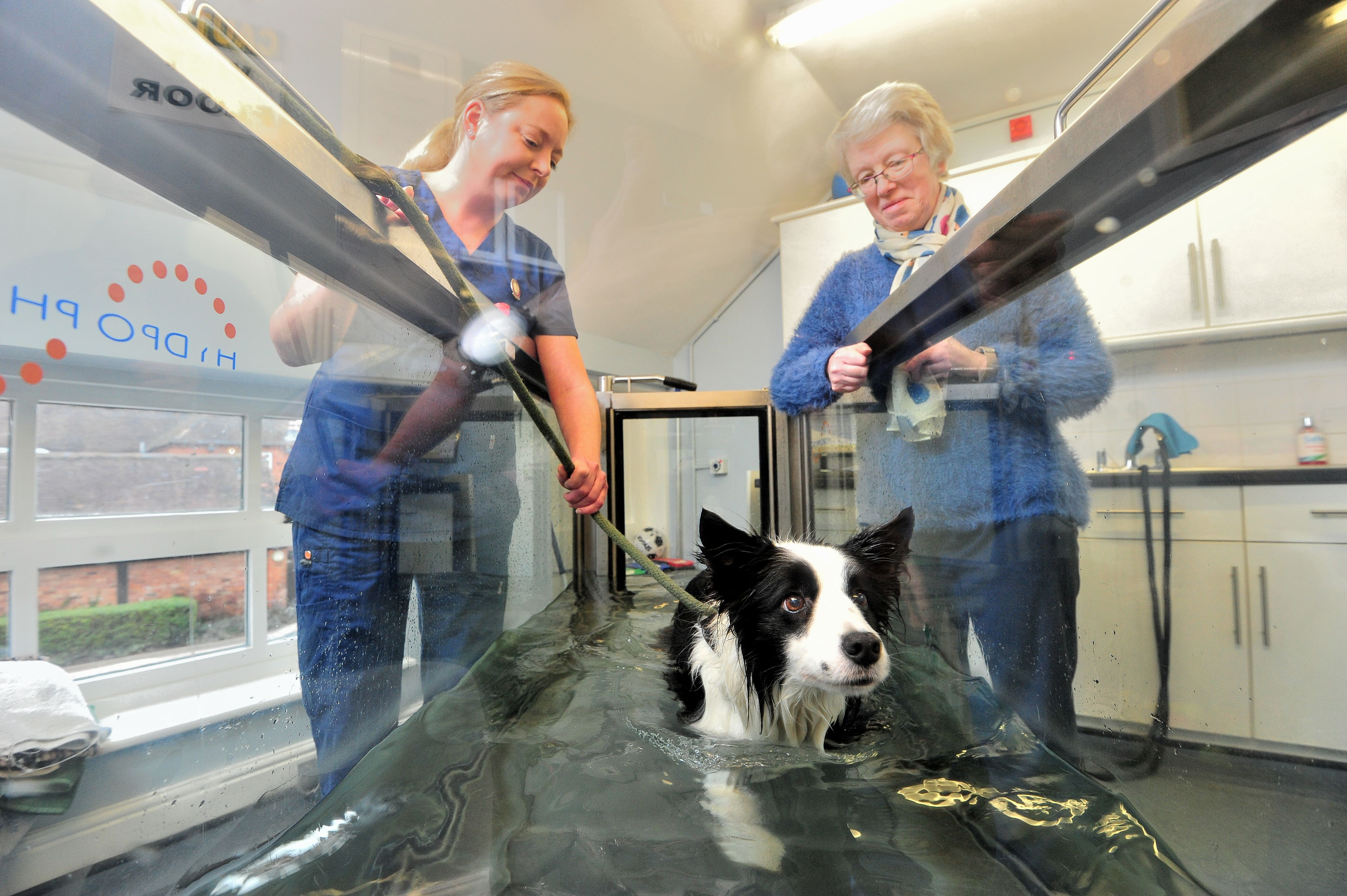 Severn Veterinary Centre and Hydrotherapy Suite - Worcester, Worcestershire WR4 9UP - 01905 756156 | ShowMeLocal.com