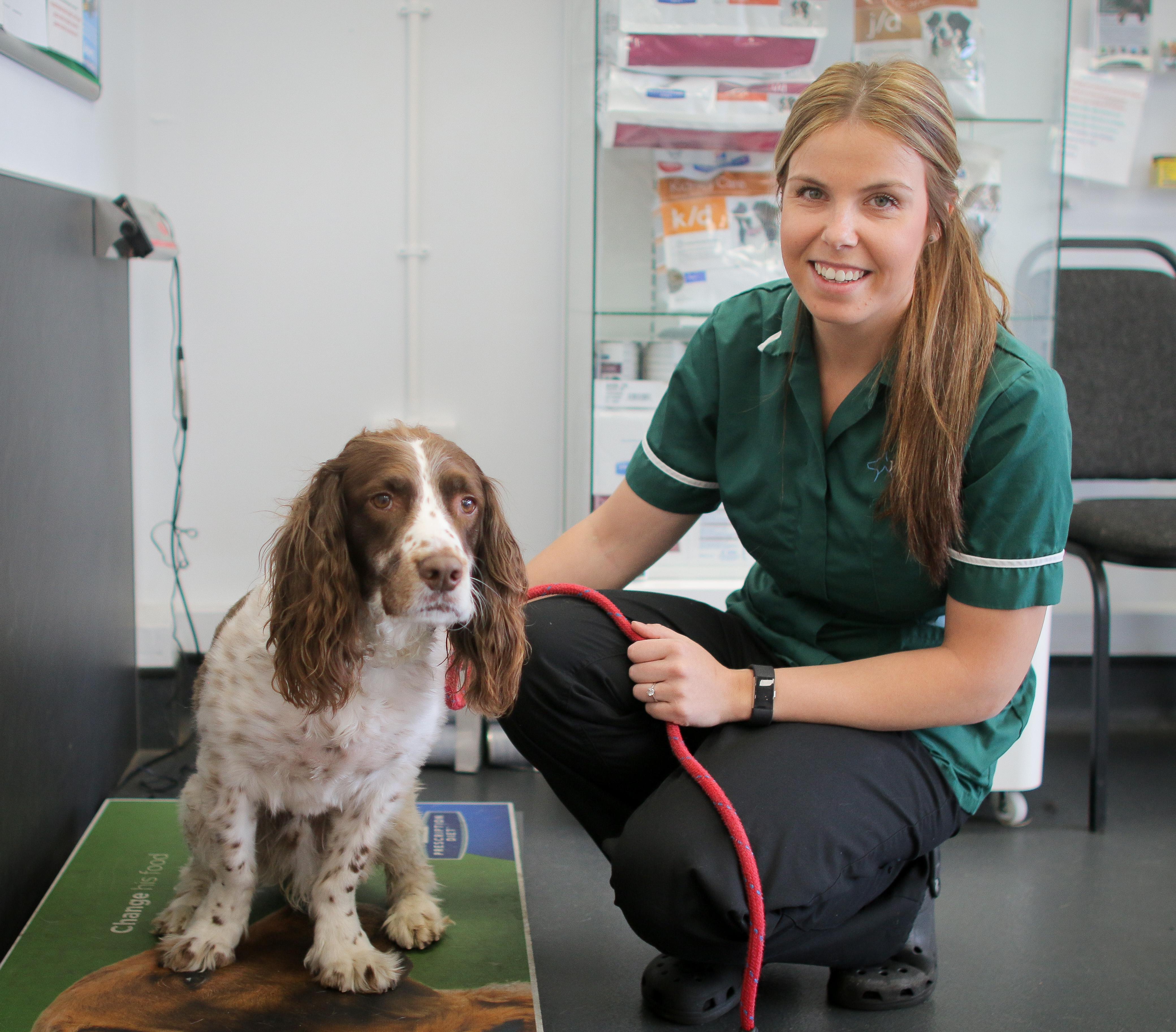 Westway Veterinary Group, Eden Hill Stanley 01913 700369