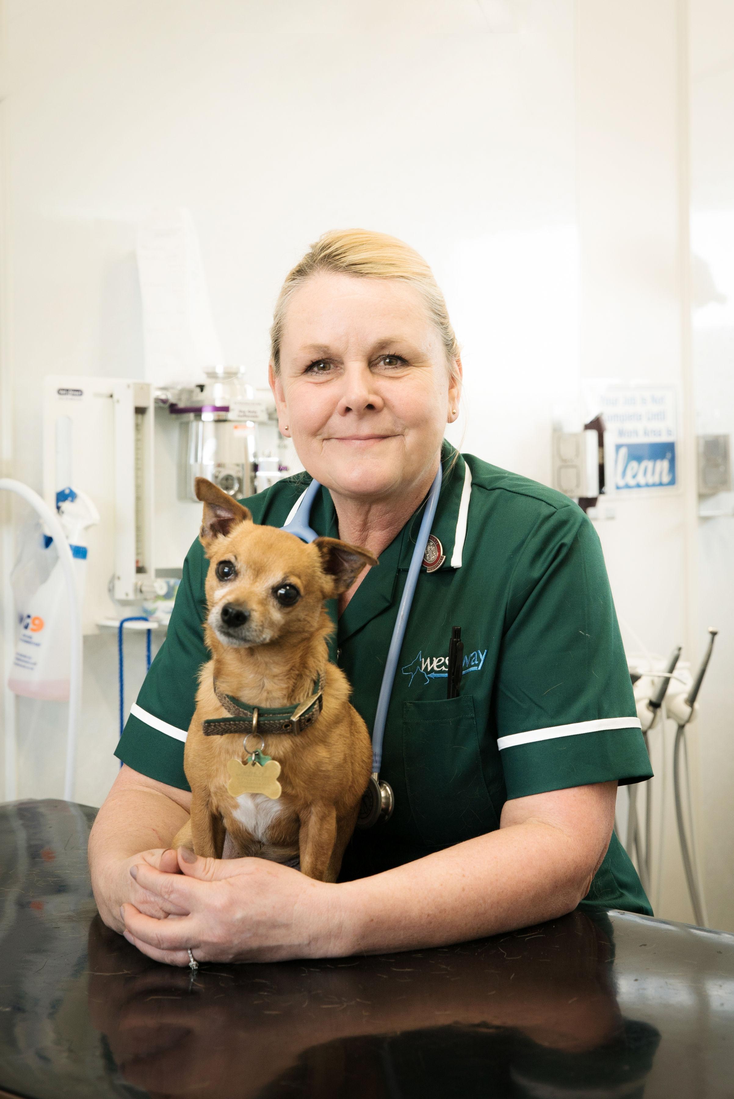 Westway Veterinary Group, Sunderland - Sunderland, Tyne and Wear SR4 7YB - 01915 659455 | ShowMeLocal.com