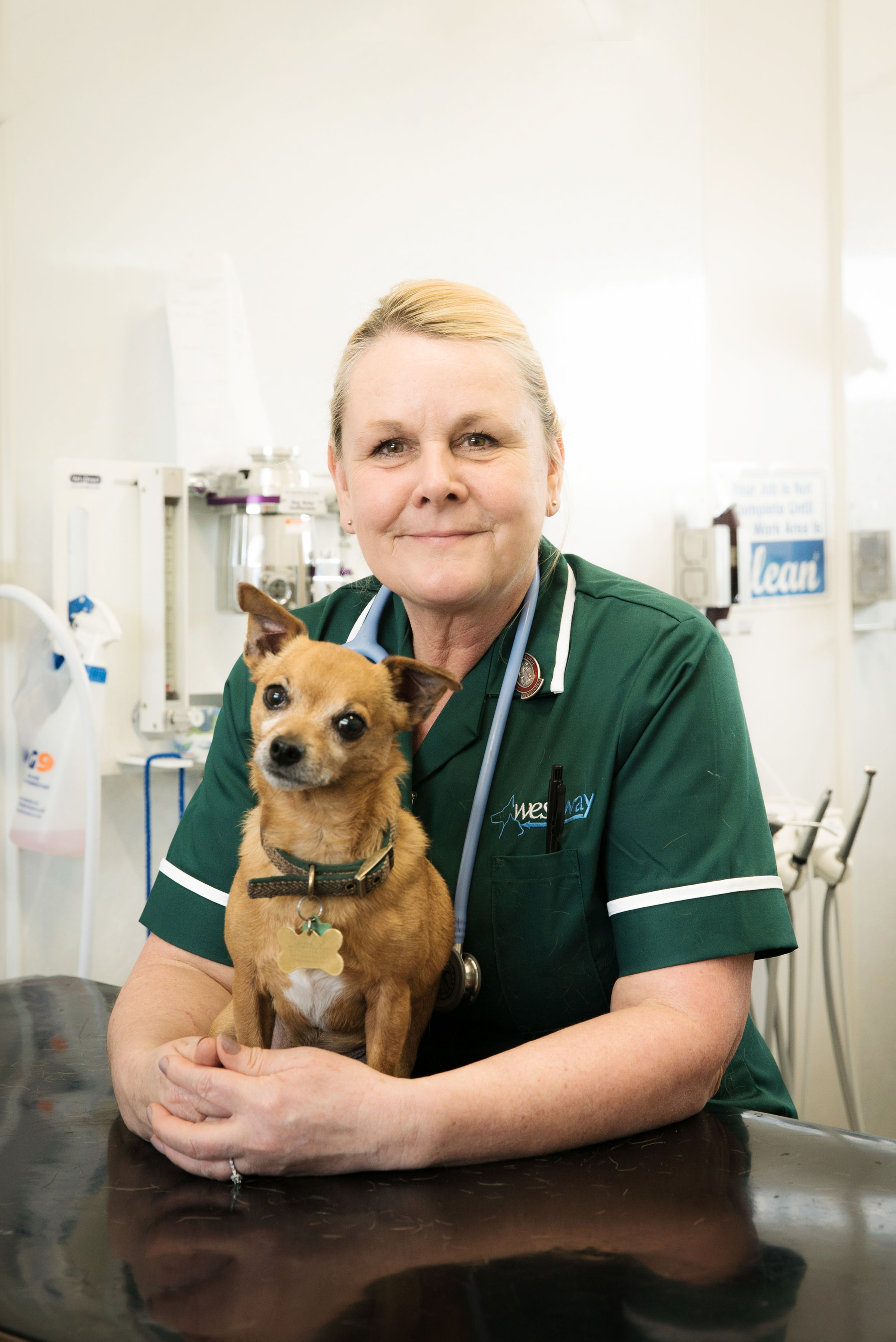 Westway Veterinary Group, Shiney Row - Houghton le Spring, Tyne and Wear DH4 4QU - 01913 857730 | ShowMeLocal.com