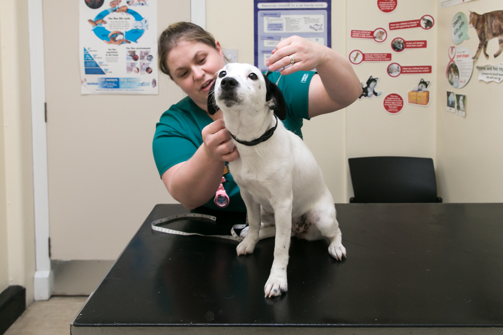 Charter Veterinary Surgeons, Newcastle-Under-Lyme - Newcastle, Staffordshire ST5 1ED - 01782 616551 | ShowMeLocal.com