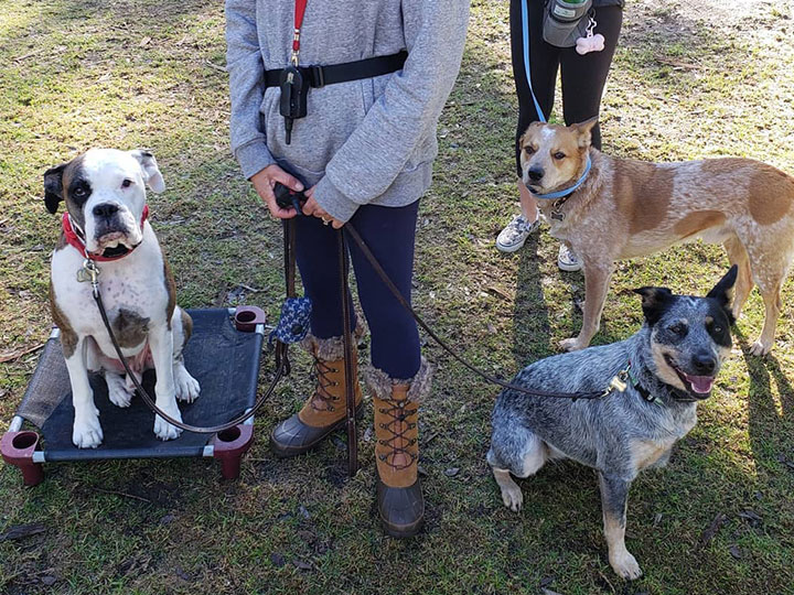 Sit Means Sit Dog Training South Orange County