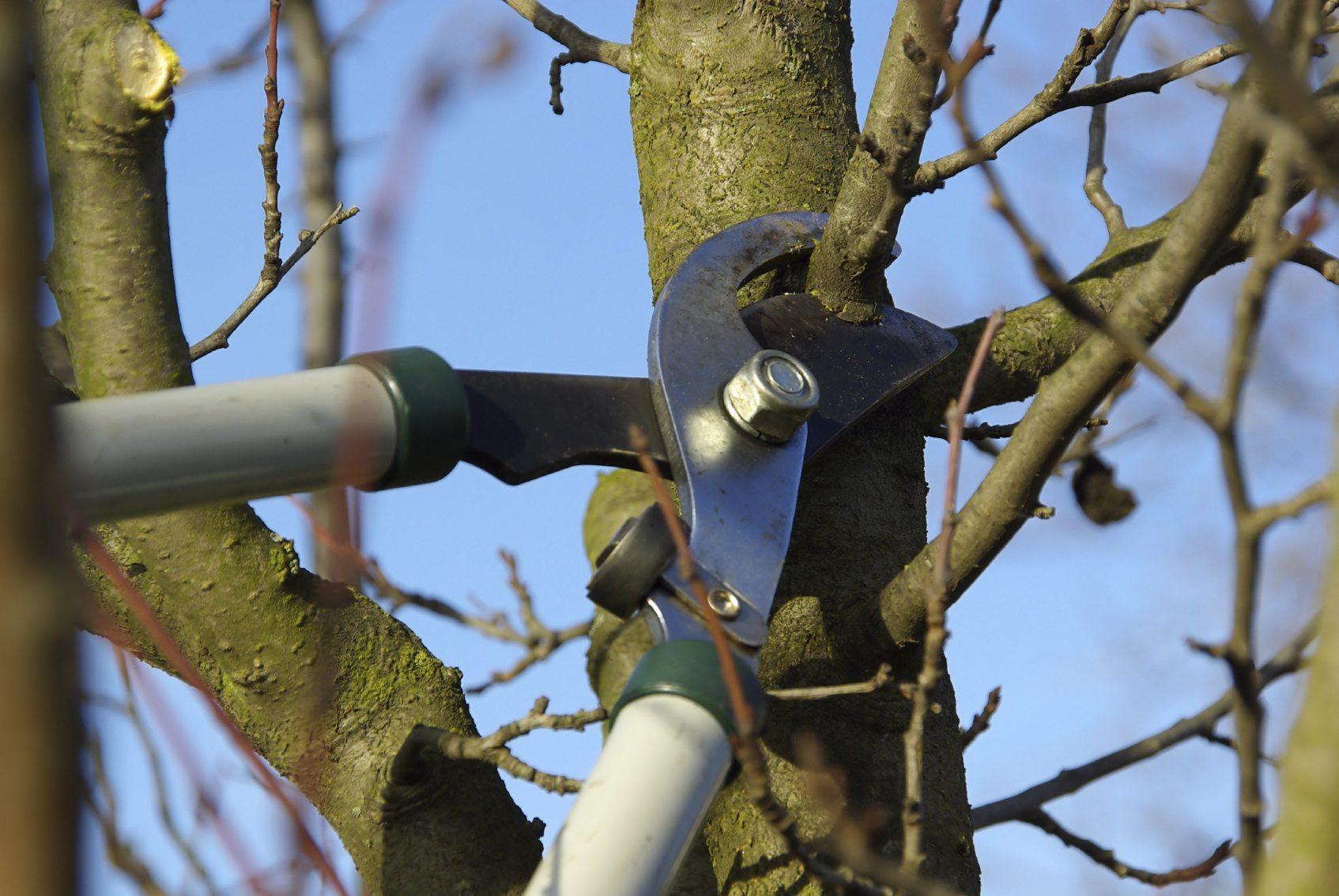 Woodpecker Tree Fellers