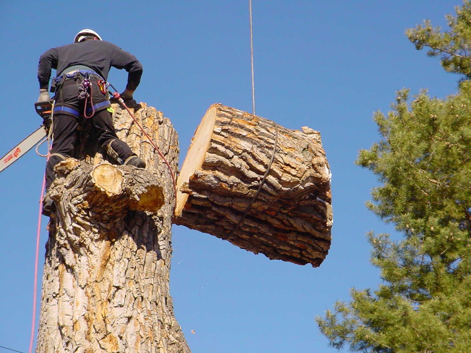 The Tree Feller of Pinellas - Largo, FL 33771 - (727)287-5767 | ShowMeLocal.com