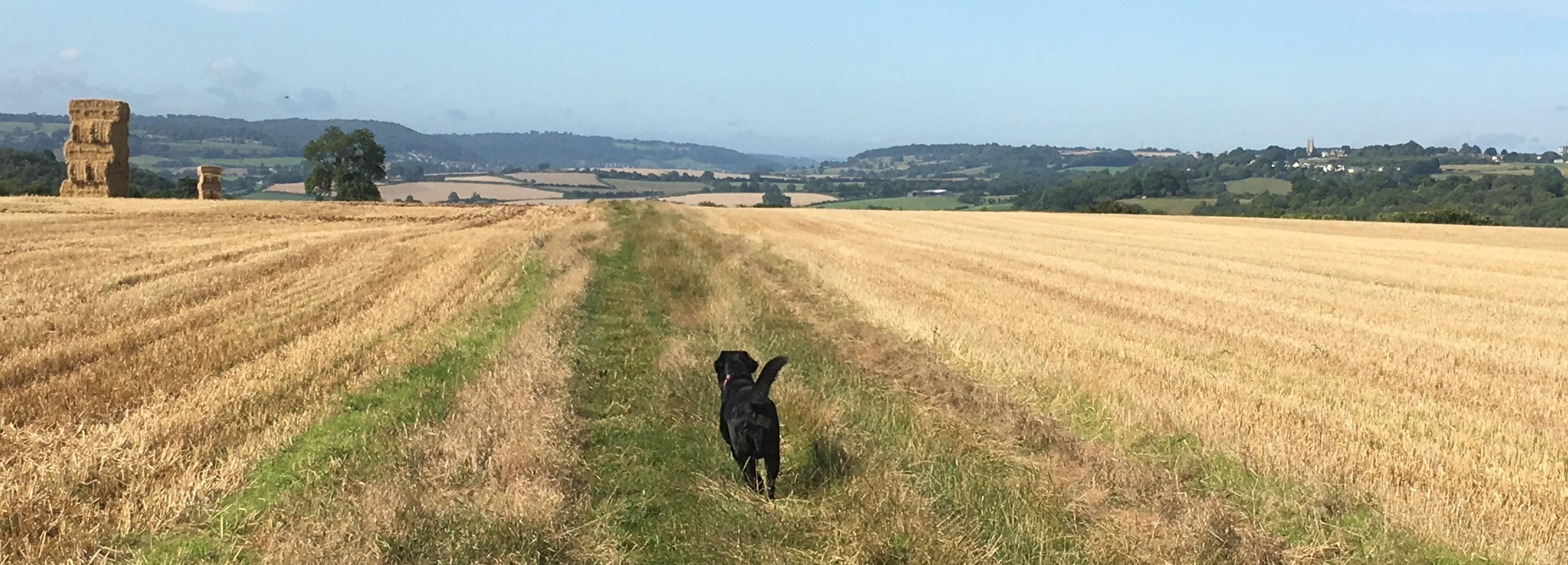 Playful Paws Dog Walks - Chippenham, Wiltshire SN15 2NQ - 07745 344850 | ShowMeLocal.com