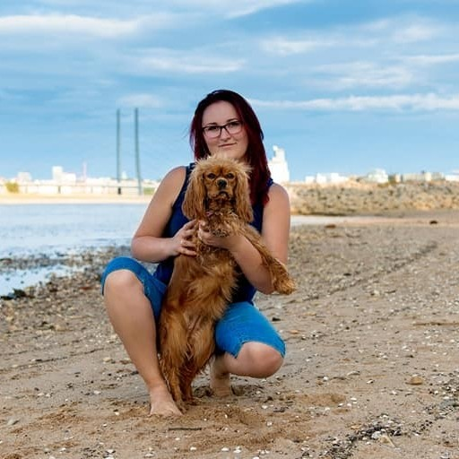 Hundeschule Lapki mit Tagesbetreuung