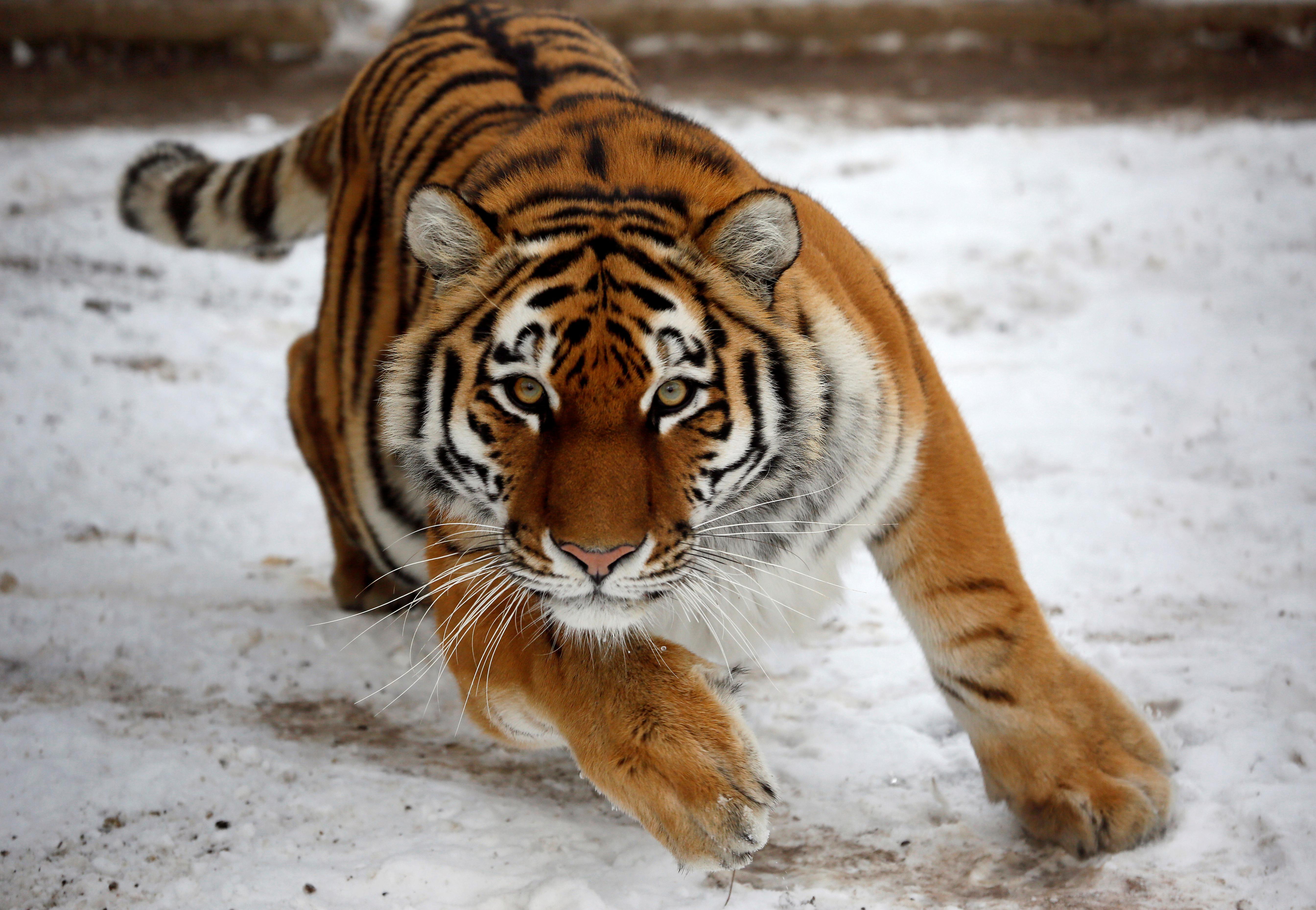 Tiger Retail
