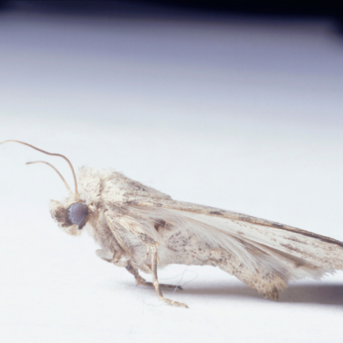Swift Pest Control Aylesbury